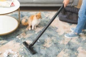 המלצה ניקוי שטיחים באילת