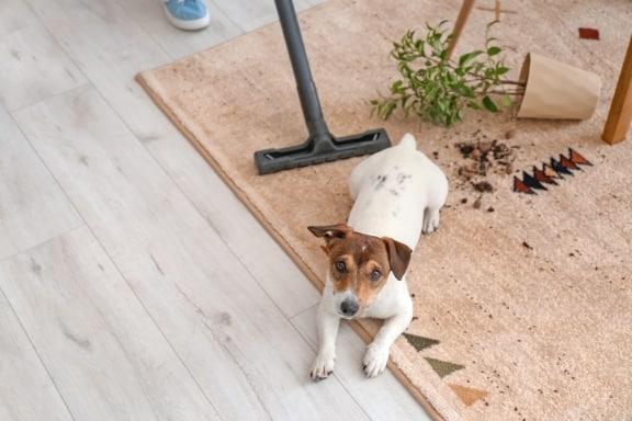 מחיר ניקוי שטיחים ביבנה