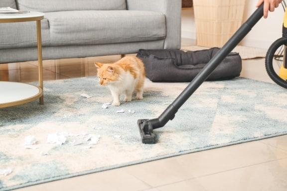 מחיר ניקוי שטיחים ברעננה