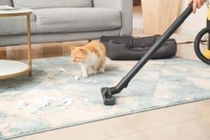 ניקוי שטיחים באשדוד מומלץ