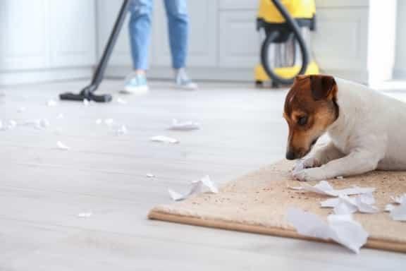 מחיר ניקוי שטיחים עד הבית